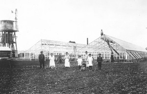 Greenhouses being constructed on the Nomura Nursery, 1920s. .