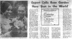 George Shiraki as head rosarian at Oakland's Morcum Rose Garden, Oakland Tribune, 20 May 1972.