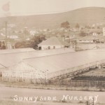 Sunnyside Nursery stitch panorama crop2